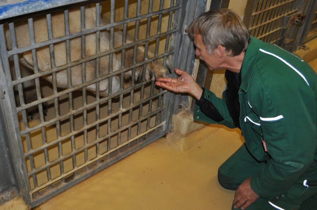 Tiertrainer hält Eisbärentatze