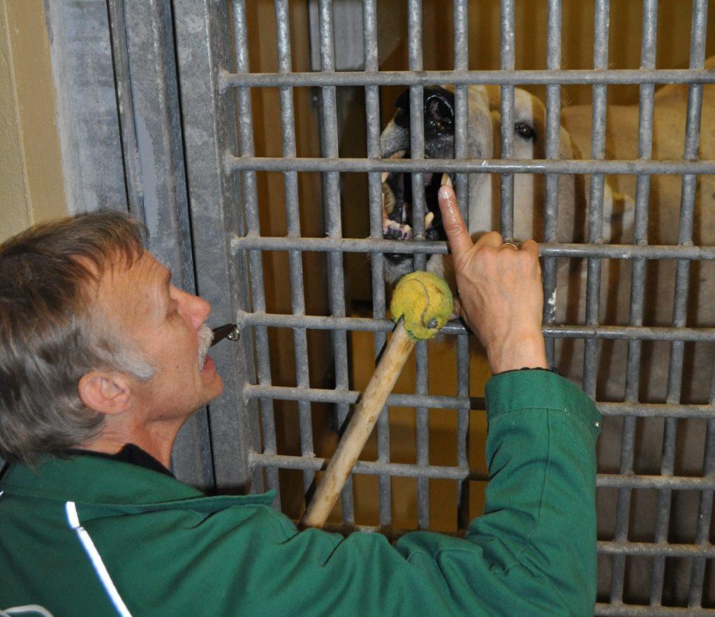 Tiertrainer berührt Zahn eines Eisbären