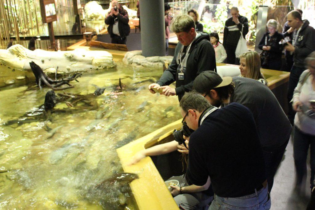 Menschen fotografieren Fische bei der Fütterung