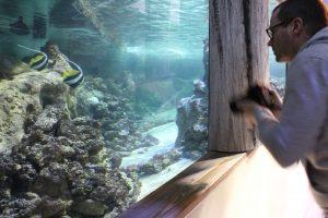 Ein Mann steht vor einem Aquarium im Klimahaus Bremerhaven