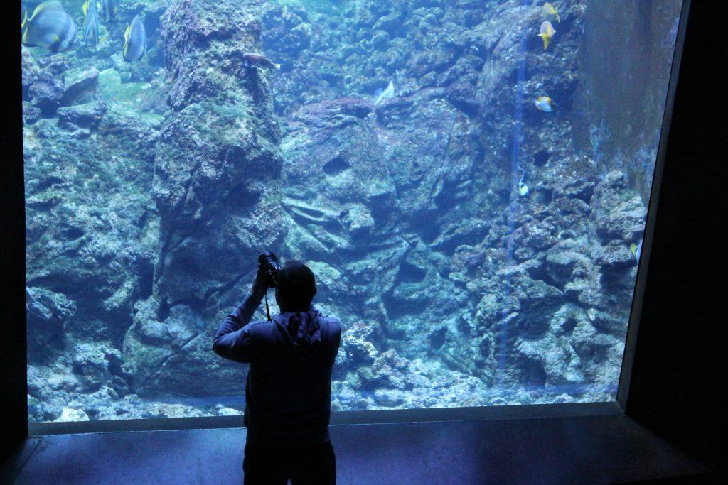Ein Mann steht vor einem Aquarium und fotografiert Fische