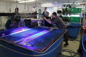 Drei Männer fotografieren ein blaues Fischbecken.