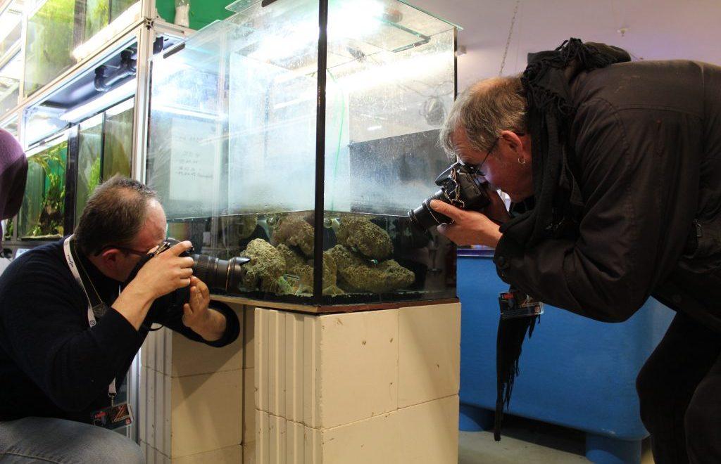 Zwei Männer fotografieren ein Aquarium.
