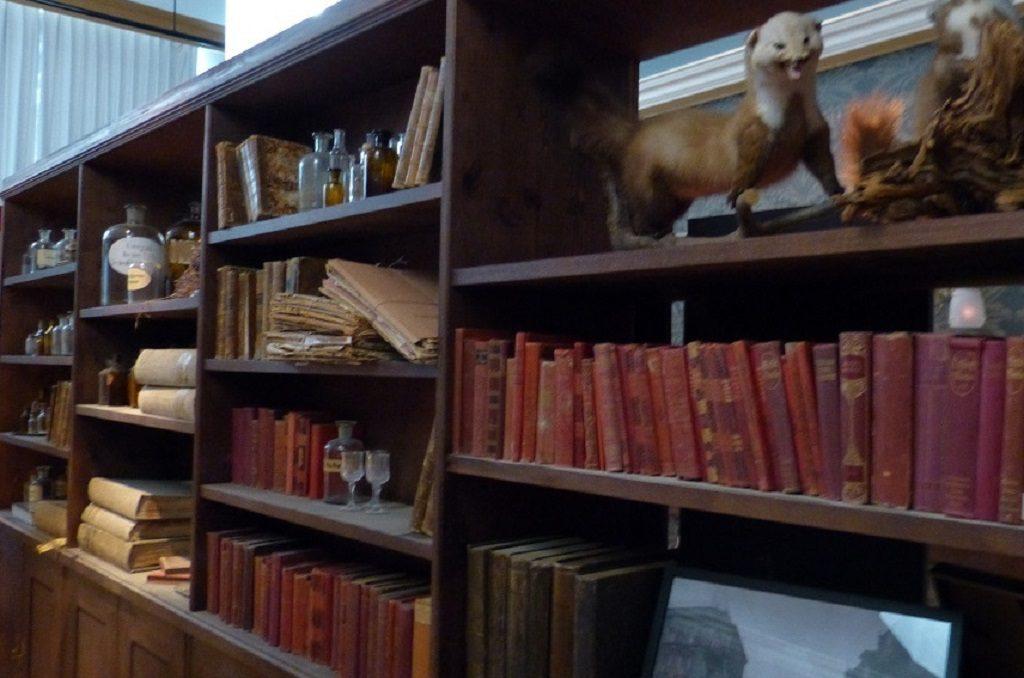 Regal mit alten Büchern, ausgestopften Tieren und Medizinflaschen