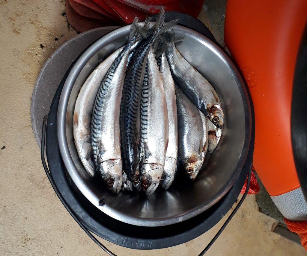 Leckere Makrelen für die Robben im Zoo am Meer (c) Tanja Albert