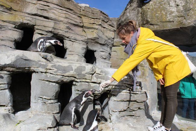 InstaWalk Zoo am Meer (c) Tanja Albert