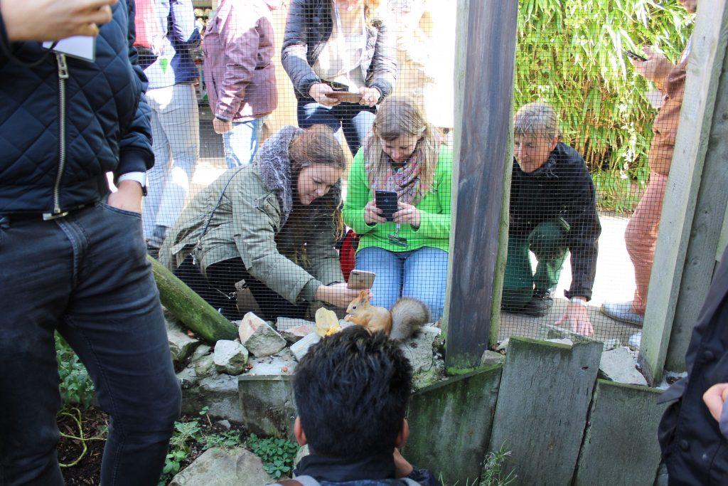 Das Eichhörnchen im Zoo am Meer lässt sich nicht von uns stören (c) Tanja Albert