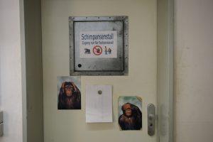 Tür zum Schimpansenstall