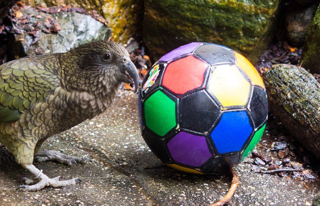 Ein Fußball als Spielzeug. [© Antje Mewes]