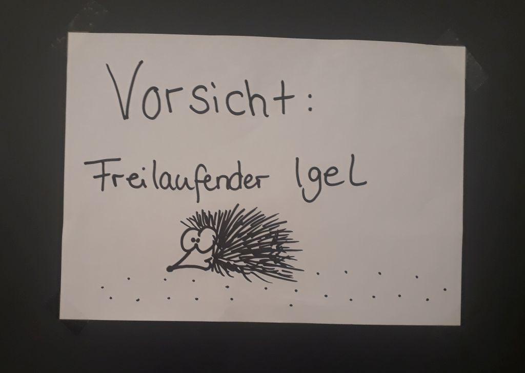Vorsichtig piekst! Igel auf Wanderschaft im Klimahaus Bremerhaven 8° Ost (c) Tanja Albert