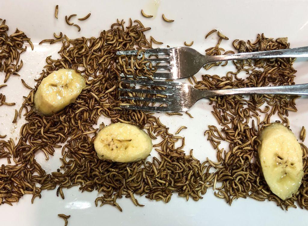 Buffalowürmer zum Dessert beim InstaWalk im Klimahaus Bremerhaven (c) Katja Klemm
