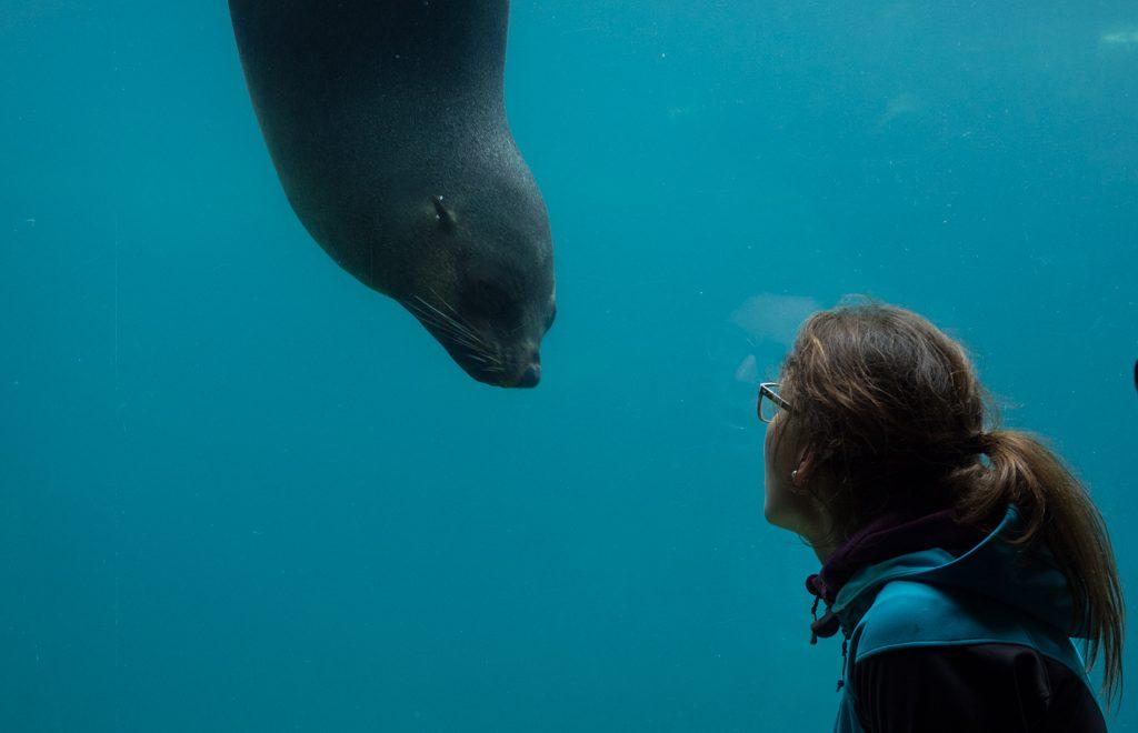 Unterwasserscheibe Robben Wassereinsicht bei den Robben [© Antje Mewes]
