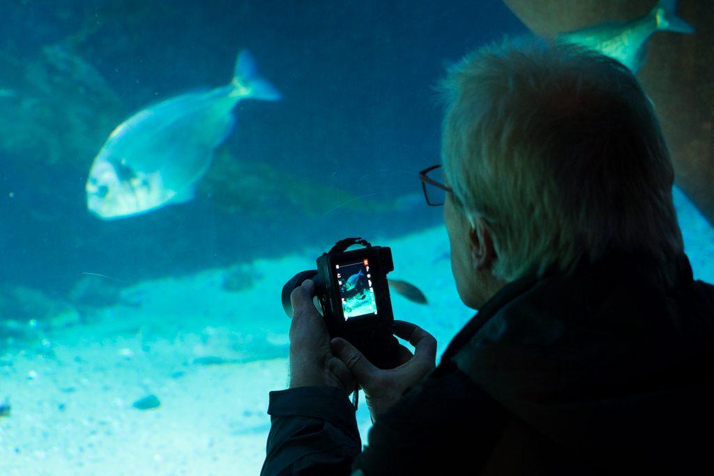 Fotografieren im Aquarium