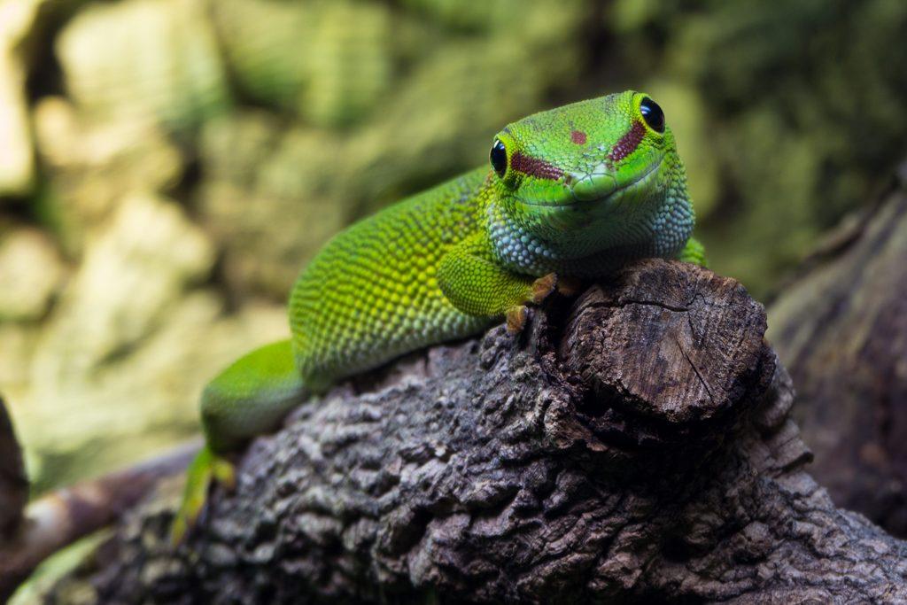 Beispielfoto Gecko