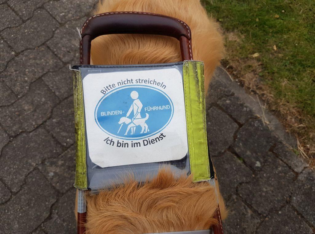 Ein Führhund im Dienst sollte nicht angesprochen und gestreichelt werden, um ihn von seiner Aufgabe nicht abzulenken (c) Tanja Albert
