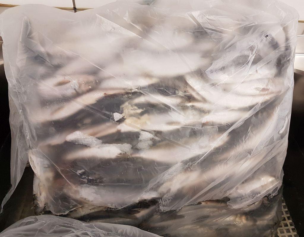 Gefrorener Fisch in der Futterküche im Zoo am Meer (c) Tanja Albert