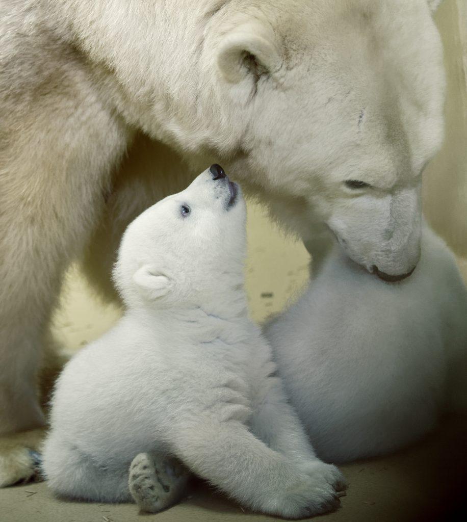 Mutter und Jungtiere