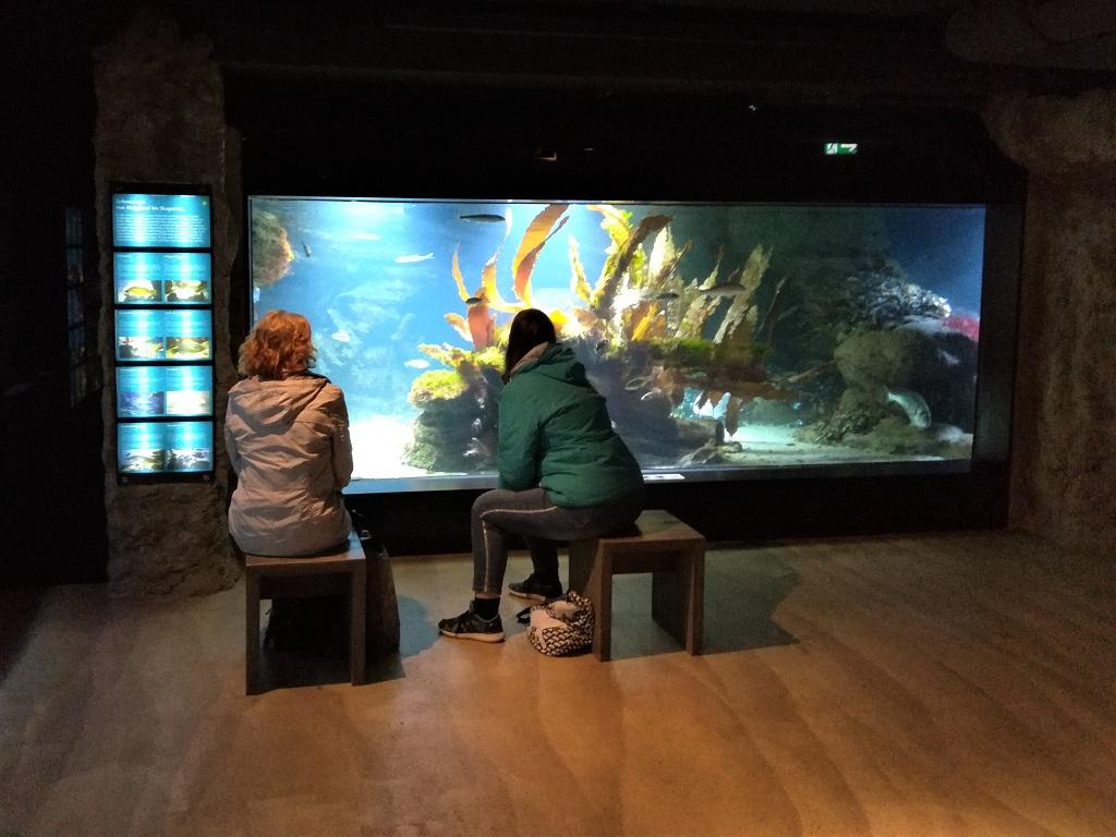 Stammgäste im Zoo am Meer