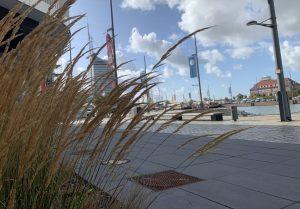 10 Gründe für Bremerhaven: Wehendes Schilfgras vor dem Neuen Hafen in Bremerhaven (c) Lina Selimi