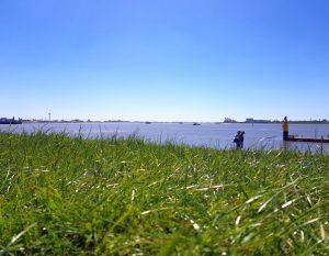 Blick über das Gras am Deich auf die Weser (c) Adobe Stock
