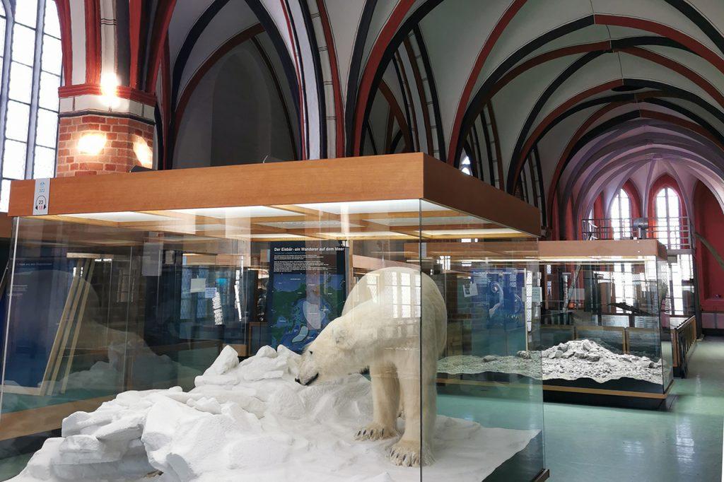 Der Eisbär steht im alten Klostergang, der zum Museum gehört.