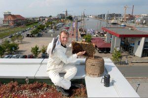 Imker mit Wabe und Bienenkorb auf dem Dach in den Havenwelten (c) Sandra Beckefeldt