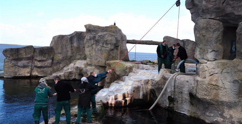 Die Tierpfleger lassen die Pumpen ins Wasser