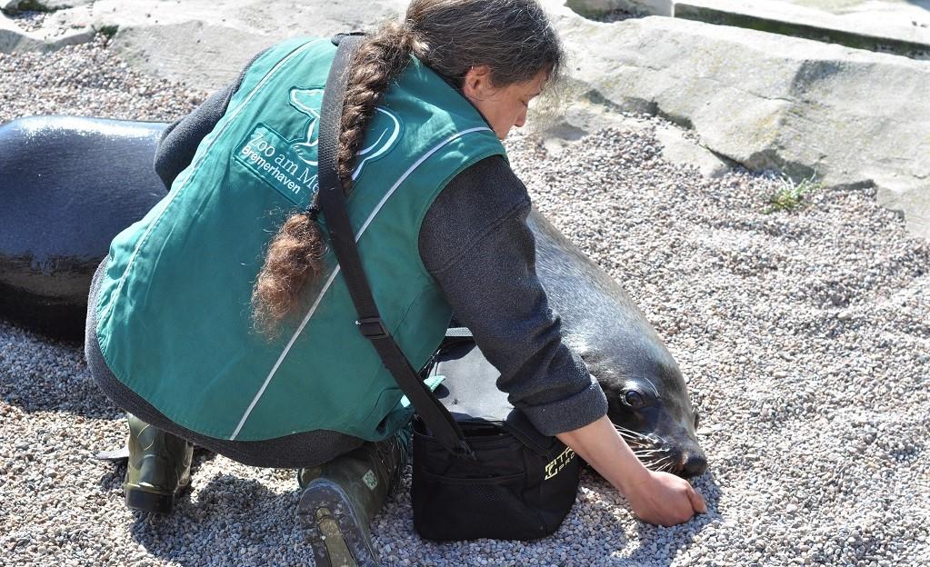 Carmen beim Training mit den Robben