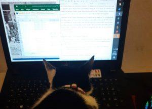 """Die Katze Mint unterstützt Neele Bahr bei ihren Arbeiten für """"Das Andere sehen?""""."""