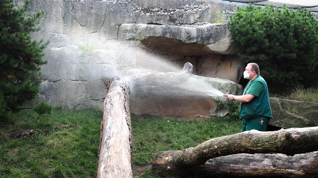 Gartenarbeit auf der Pumaanlage